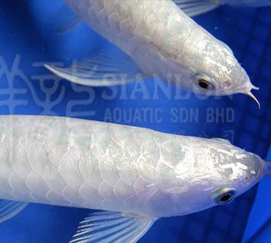 这鱼值多钱 30厘米不算龙须